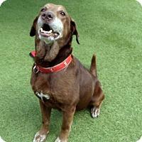 Adopt A Pet :: Precious - Buckeystown, MD