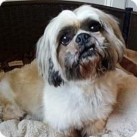 Adopt A Pet :: Yogi - Lawrenceville, GA