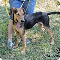 Adopt A Pet :: Chase - Washington, GA