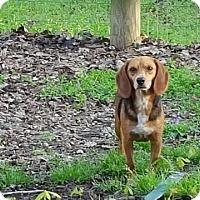 Adopt A Pet :: Sash - Alexandria, VA