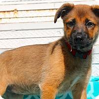 Adopt A Pet :: Ruda Lee - Los Angeles, CA