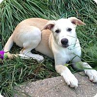 Adopt A Pet :: Serene - New Oxford, PA