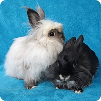Adopt A Pet :: Tribble - Los Angeles, CA