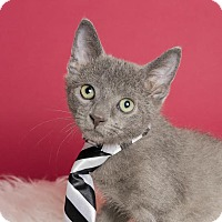 Adopt A Pet :: Tie - Columbia, IL