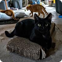 Adopt A Pet :: Georgia - Manitowoc, WI