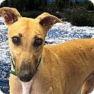 Adopt A Pet :: Kelci