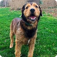 Terrier (Unknown Type, Medium) Mix Dog for adoption in Suwanee, Georgia - Brock
