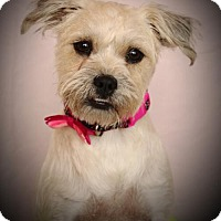 Adopt A Pet :: Sarah - Carrollton, TX