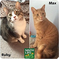 Adopt A Pet :: Max & Ruby - Oakville, ON