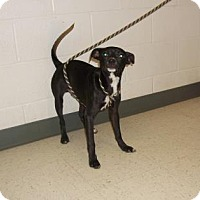 Adopt A Pet :: Sam (Foster Hero Needed URI) - Gulfport, MS