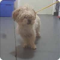 Adopt A Pet :: 17-01-0159 Jed - Dallas, GA