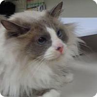 Adopt A Pet :: Elvis - Wildomar, CA