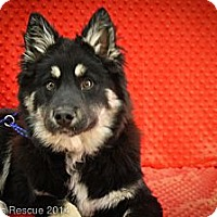 Adopt A Pet :: HotStuff - Broomfield, CO
