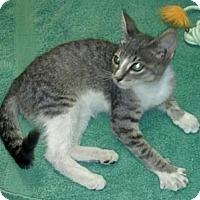 Adopt A Pet :: Sunshine - Delray Beach, FL