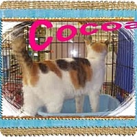 Adopt A Pet :: Cocoa - Jacksonville, FL