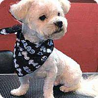 Adopt A Pet :: Albert - Mooy, AL