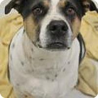 Adopt A Pet :: Stetson - Yukon, OK