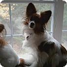 Adopt A Pet :: Hemi - Local