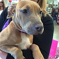 Adopt A Pet :: Layla - Sacramento, CA