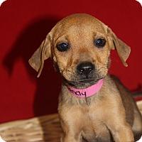 Adopt A Pet :: Wendy - Waldorf, MD