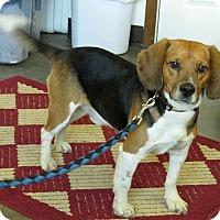 Adopt A Pet :: Charlie - Hillsboro, IL
