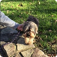 Adopt A Pet :: Spanky - Hixson, TN