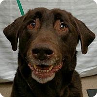 Adopt A Pet :: Bear #8 - Buckeystown, MD