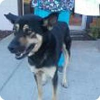 Adopt A Pet :: Connor - Seattle, WA