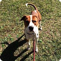 Adopt A Pet :: Bubba - Daleville, AL