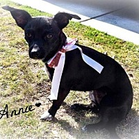 Chihuahua/Dachshund Mix Dog for adoption in Bakersfield, California - Annie