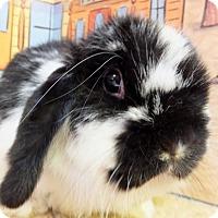 Adopt A Pet :: Anna Banana - Foster, RI