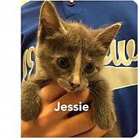 Adopt A Pet :: Jessie - Herndon, VA