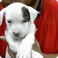 Adopt A Pet :: A272436 - Conroe, TX
