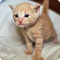 Adopt A Pet :: Dannon - Tanner, AL