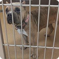 Adopt A Pet :: Mallory - Las Vegas, NV
