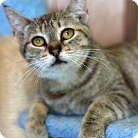Adopt A Pet :: Becca - Dalton, GA