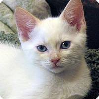 Adopt A Pet :: Ross - Davis, CA