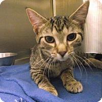 Adopt A Pet :: Malibu - Chambersburg, PA