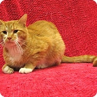 Adopt A Pet :: Cheese-it - Redwood Falls, MN