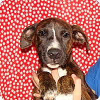 Adopt A Pet :: Sweetpea - Oviedo, FL