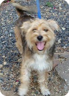 Standard Schnauzer/Terrier (Unknown Type, Medium) Mix Dog for adoption in Fresno, California - Rex