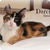 Adopt A Pet :: Darci - Glen Mills, PA