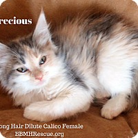 Adopt A Pet :: Precious - Temecula, CA