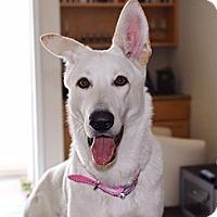 Adopt A Pet :: Olivia - San Diego, CA