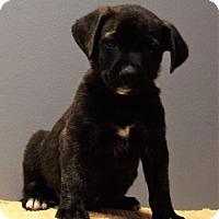 Adopt A Pet :: Pilgrim - Valparaiso, IN