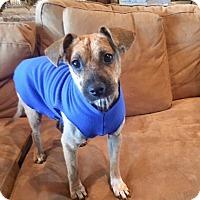 Adopt A Pet :: Ember - Christiana, TN
