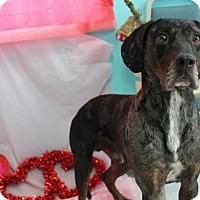 Adopt A Pet :: Roger - Erwin, TN