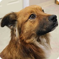 Adopt A Pet :: Zohar - Alexandria, VA