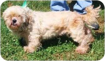 Small Dogs In Zanesville Ohio