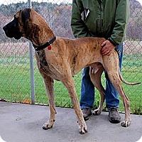 Adopt A Pet :: Zorro - Pearl River, NY
